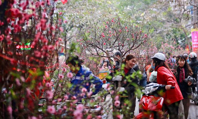 Peach Blossom in Hanoi
