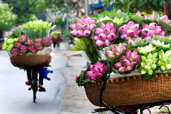 Blossom season in hanoi vietnam welcome to hanoi the vietnamese has a famous folk poems meaning that in the pond nothings more beautiful than lotus the flower of the dawn mightylinksfo