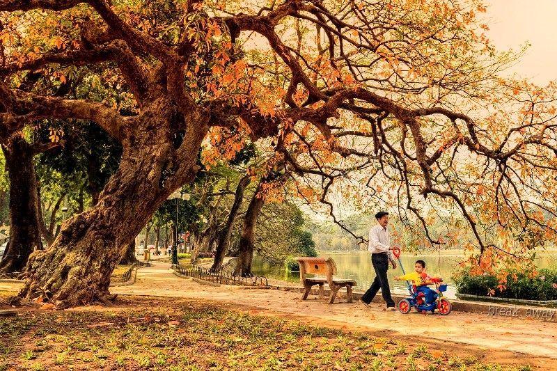 Сезам дерева по Хоан Кием