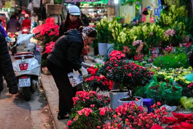 Hoang Hoa Tham - eine der schönsten Straße von Hanoi